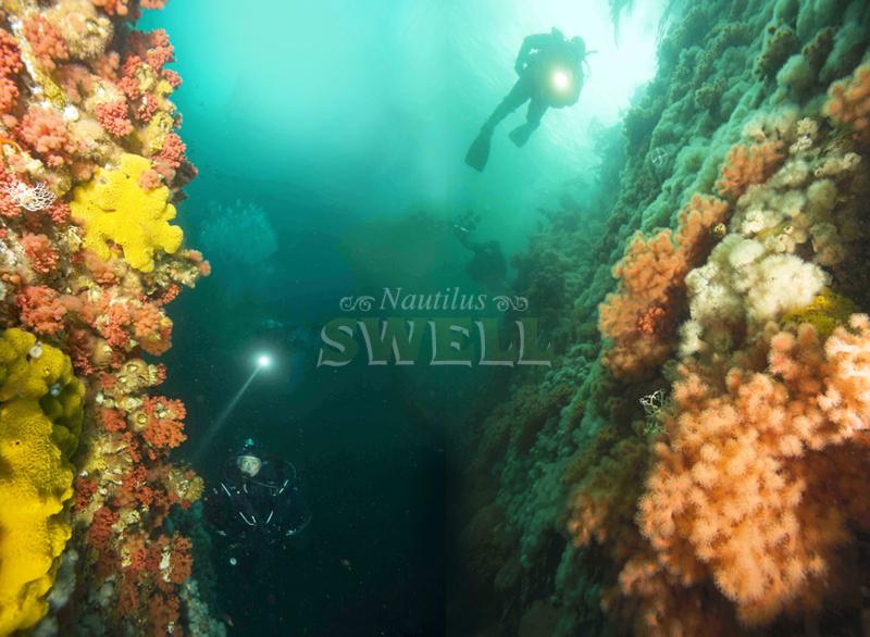 Scuba Diving North Vancouver Island