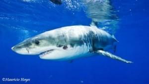 2014_Mar21_sharks 2w